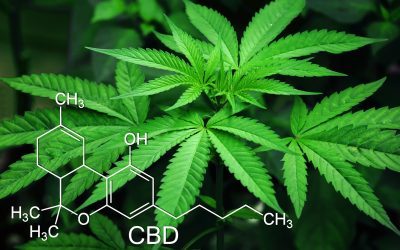 How CBD is Extracted